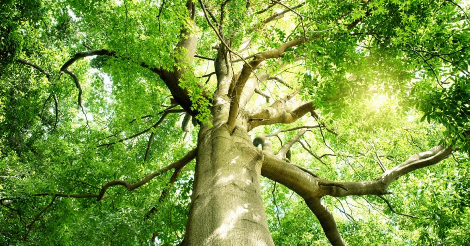 Divoké bylinky a chlorofyl